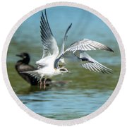 Forster's Tern 5497-092117-2 Round Beach Towel