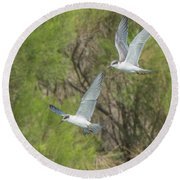 Forster's Tern 5706-092217-1cr Round Beach Towel