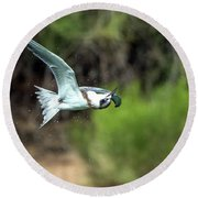 Forster's Tern 5744-092217-1cr Round Beach Towel