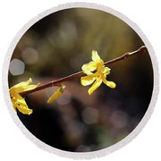 Round Beach Towel featuring the photograph Forsythia Flowers by Helga Novelli