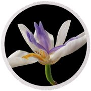 Fortnight Lily On Black Round Beach Towel