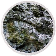 Round Beach Towel featuring the photograph Fossil In The Wall by Francesca Mackenney