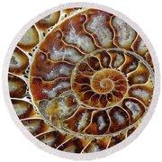 Fossilized Ammonite Spiral Round Beach Towel