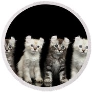 Four American Curl Kittens With Twisted Ears Isolated Black Background Round Beach Towel