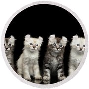 Four American Curl Kittens With Twisted Ears Isolated Black Background Round Beach Towel by Sergey Taran