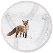 Fox 1 Round Beach Towel
