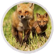 Fox Family Round Beach Towel by Mircea Costina Photography