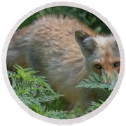 Fox In The Ferns Round Beach Towel