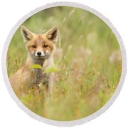 Fox Kit In The Filed Round Beach Towel
