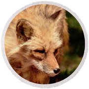 Round Beach Towel featuring the photograph Fox On The Hunt by Debby Pueschel