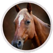 Fox - Quarter Horse Round Beach Towel by Sandy Keeton
