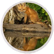 Fox Reflection Round Beach Towel by James Peterson