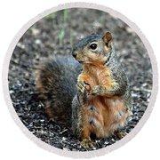 Fox Squirrel Breakfast Round Beach Towel