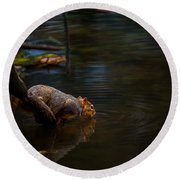 Fox Squirrel Drinking Round Beach Towel