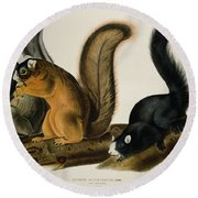 Fox Squirrel Round Beach Towel by John James Audubon