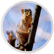 Fox Squirrel's Last Look Round Beach Towel