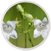 Foxglove Beardtongue Round Beach Towel