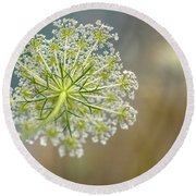 Fragile Dill Umbels On Summer Meadow Round Beach Towel
