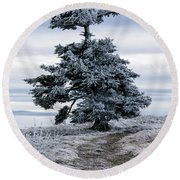 Round Beach Towel featuring the photograph Frasier Fir Tree Grows Naturally by Serge Skiba