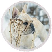 French Bulldog In The Snow Round Beach Towel