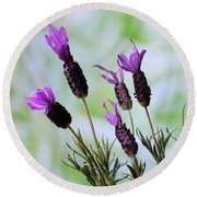 Round Beach Towel featuring the photograph French Lavender by Terence Davis