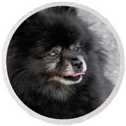 Round Beach Towel featuring the photograph Fresh Dog by Debbie Stahre