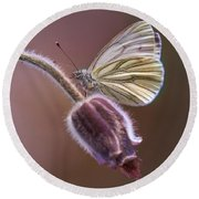 Fresh Pasque Flower And White Butterfly Round Beach Towel by Jaroslaw Blaminsky