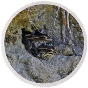 Round Beach Towel featuring the photograph Friendly Frogs by Al Powell Photography USA