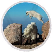 Leaping Baby Mountain Goat Round Beach Towel