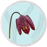 Round Beach Towel featuring the photograph Fritillaria Meleagris Blue Background by Paul Gulliver