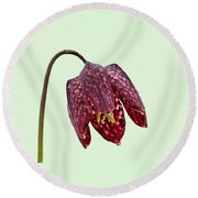 Round Beach Towel featuring the photograph Fritillaria Meleagris Green Background by Paul Gulliver