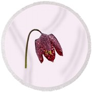 Round Beach Towel featuring the photograph Fritillaria Meleagris Transparent Background by Paul Gulliver