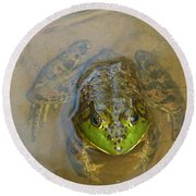 Frog Of Lake Redman Round Beach Towel by Donald C Morgan