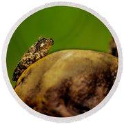 Frog Waits Round Beach Towel