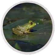 Round Beach Towel featuring the photograph Froggy 2 by Douglas Stucky