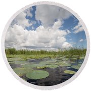 From A Frog's Point Of View - Lake Okeechobee Round Beach Towel