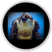From The Series The Osprey Number 3 Round Beach Towel