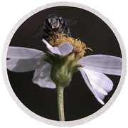 Frontal View Of A Bee On A Flower Round Beach Towel