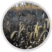 Frosted Foxtail Grasses In Glacial Park Round Beach Towel