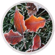 Round Beach Towel featuring the photograph Frosted Leaves by Shari Jardina
