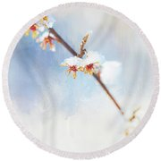 Frosted Witch Hazel Blossoms  Round Beach Towel