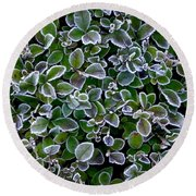 Frosty Hedgerow Round Beach Towel