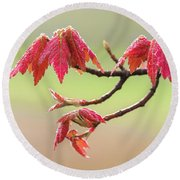 Frosty Maple Leaves Round Beach Towel