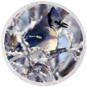 Frosty Morning Blue Jay Round Beach Towel