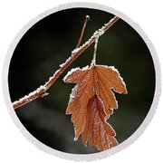 Round Beach Towel featuring the photograph Frozen Leaf - 365-287 by Inge Riis McDonald
