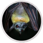 Round Beach Towel featuring the photograph Fruit Bat by Anthony Jones