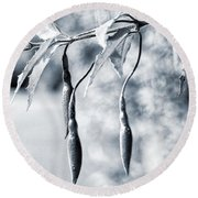 Round Beach Towel featuring the photograph Fuchsia Bud by Keith Elliott