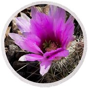 Round Beach Towel featuring the photograph Fuchsia Cactus Blossom by Phyllis Denton