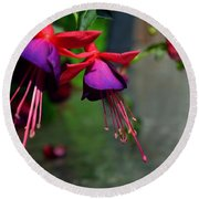 Fuchsia Original Photo Round Beach Towel
