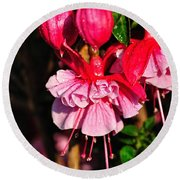 Fuchsias With Droplets Round Beach Towel